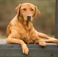 – Rusty Dog