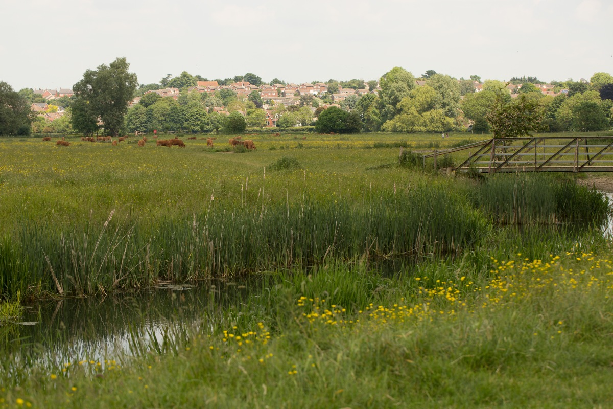 View of Sudbury Water Meadows