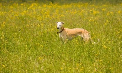 rascals meadows-4