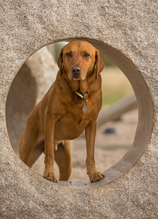 Rusty at Cudmore Park, East Mersea