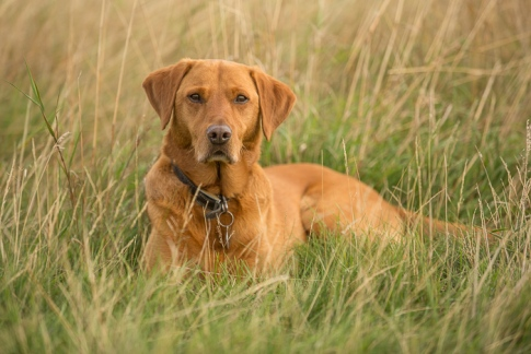 Rusty in the grass, Cudmore Grove, East Mersea