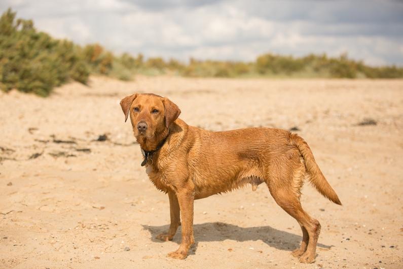 Rusty on the beach, Cudmore Grove, East Mersea