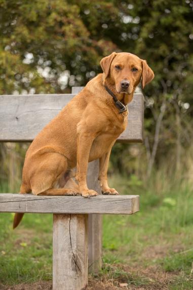 Rusty in posing mood at Cudmore Grove, East Mersea