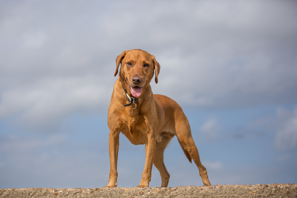 Rusty in posing mood at Cudmore Grove, East Mersea