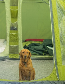 Rusty in the tent