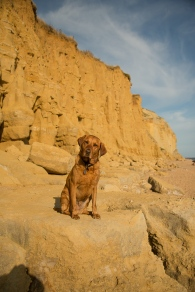 Rusty by the cliffs at Burton Bradstock