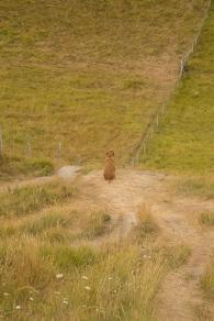 Rusty on the coastal path near Durdle Door, Dorset