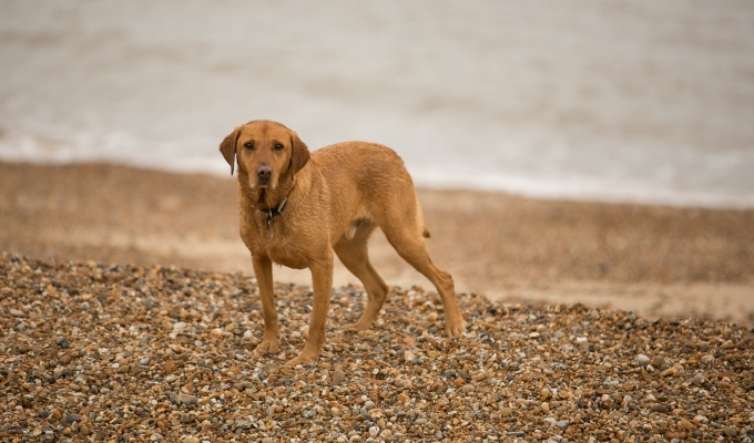 Dogs at the Beach – Felixstowe