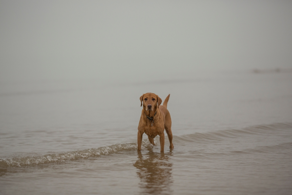 Rusty Dog in the Sea