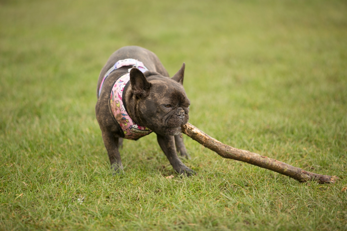 Lola with stick