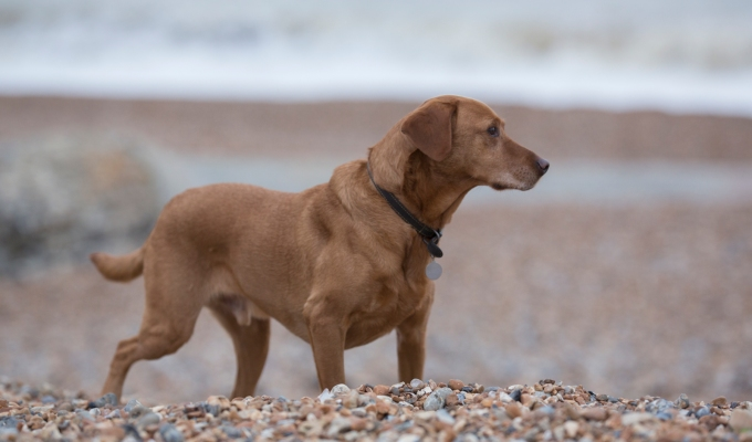 Rusty in Brighton